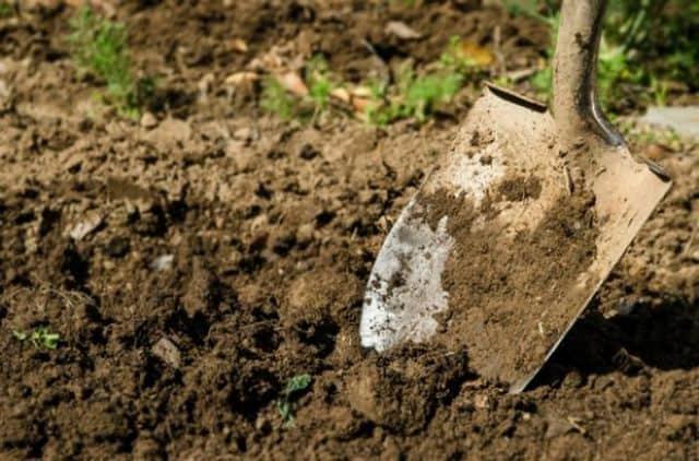 Đào hố và cất vàng trong sân vườn nhà