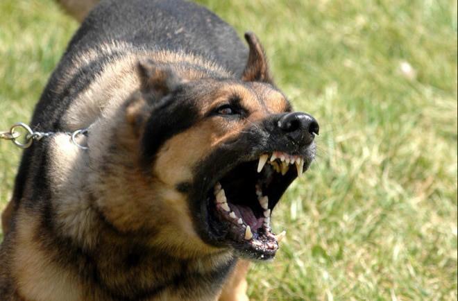 Hãy nuôi một chú chó - mẹo vặt chống trộm